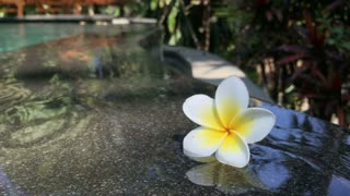A white and yellow flower, Plumeria, floating in a rippling, calm, swimming pool in Bali, Indonesia