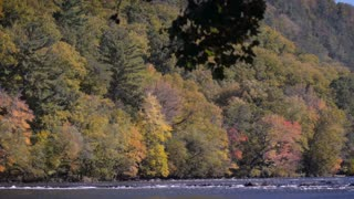 Changing leaves along the French Broad River near Hot Springs, NC in the Appalachian mountains