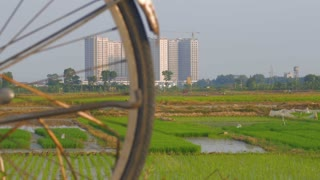 Construction and old bicycles are seen together as rice farmers work in fields