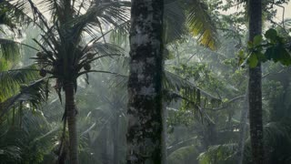 Dolly shot of a lush tropical jungle in a sun shower raining with coconuts, palm trees, and amazing natural lighting.