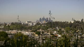 Downtown Los Angeles, California seen from East LA through grass during the day
