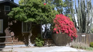 Establishing shot of a wooden shingle house with red bougainvilleas, a large cactus, a rusty mailbox, and an empty driveway for parking a car during the day - dolly shot