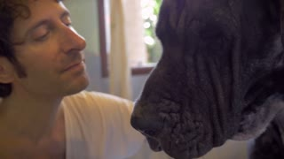 Man kissing the head of his large black breed Great Dane dog on the head while drying her off with a towel after bathing her.