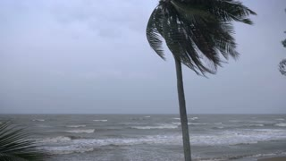 Strong winds blow through a coconut tree bending the palm fronds on the ocean with rough seas and large waves