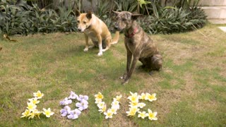 Two cute medium sized dogs sit next to yellow and blue flowers that spell out love on the lawn