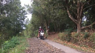 Two people riding a scooter appear to be out of control in the jungle on a very narrow road.