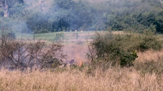 A man burning a field next to a golf course with flames and smoke