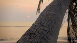 Barefoot man walking up a coconut palm tree on the ocean during sunrise or sunset as waves gently come on the beach