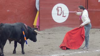 Bullfighter stabs a bull with a sword during the final stage of a bull fight however he is unsuccessful at killing the bull
