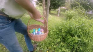Man hiding an Easter egg in a tree from a basket for a traditional Easter egg hunt