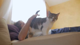 Man lying down on a bed or sofa petting a gray and white domestic shorthaired cat that walks directly towards the camera in slow motion