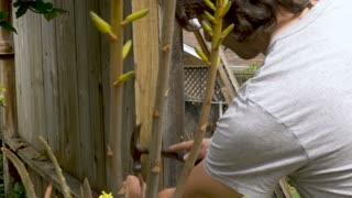 Middle aged man hammering nails into a fence with nails in his mouth