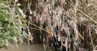 Pan showing the large extent of plastic trash wrapped around plants, branches and roots next to a river