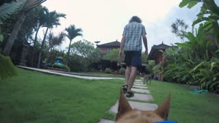 POV of a dog following it's owner back to it's home at it's luxurious villa with a pool in Bali