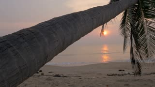 Sunrise or sunset on the ocean with a leaning coconut palm tree - dolly shot