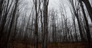 Time lapse of an eerie spooky deserted wooded forest with bare trees and fog - slow push in