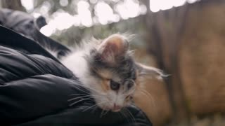 Tiny little kitten resting in a jacket shaking her head as something is bothering her ears in slow motion