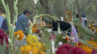TZURUMUTARO, MEXICO - NOVEMBER 1, 2016 - Mexican families prepare grave sites with flower during the celebration of Day of the Dead honoring and remembering those who have passed