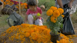TZURUMUTARO, MEXICO - NOVEMBER 1, 2016 - Young Mexican girl helping her grandmother decorate a grave during Day of the Dead outside Patzcuaro, Michoacan
