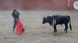Image result for bull fight