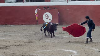 ZINAPECUARO, MEXICO - CIRCA SEPT 2016 - Skilled bullfighter using a red cape to tire a bull before he kills him with a sword during a bull fight
