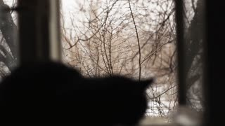 Black cat sits by the open window. Snow outside the window