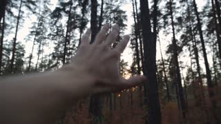 Hand in the background of the forest