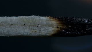 Burning Match On Black Background Macro