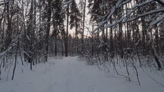 Winter Snow Forest, Walking In The Woods, Steadicam Shot