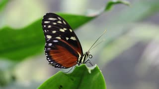 Butterfly sits on a leaf