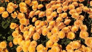 Beautiful yellow glowing flowers