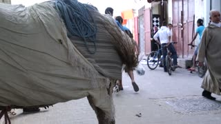 Donkey at feeding time on streets in Morocco