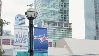 Toronto blue jays sign banner