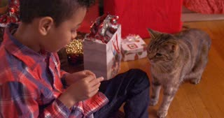 Cute cat cautiously nibbles on treat from boys hand on Christmas - slow motion