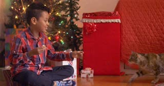 Cat crawls over to boy to eat treat from his hand on Christmas - slow motion