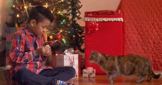 Cat takes treat and gets startled in front of Christmas tree - slow motion