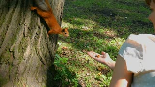 Squirrel eats nuts from hand of a young woman in summer park