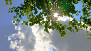 Timelapse with nature background. Sun shines through the blowing on wind tree green leaves and clouds on blue sky
