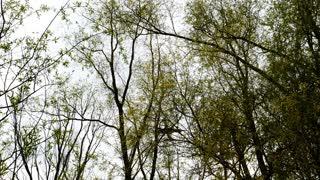 Passenger airplane landing. View throught tree crowns