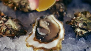 Squeezing lemon juice of oysters on the half shell. Seamless cinemagraph video
