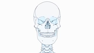 A drawing of a human skeleton on white background with matte