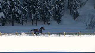 "An horse without rider galloping  in slow motion at ""White Turf"" 2014 in the magnificent scenery of the Upper Engadine on February 23rd, 2014 in St. Moritz (Switzerland)"