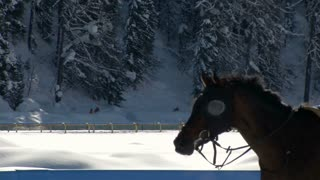 "Close up of an horse galloping  without rider in slow motion at ""White Turf"" 2014 on February 23rd, 2014 in St. Moritz (Switzerland)"