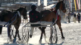 """trotters and horses in slow motion after """"White Turf"""" Grand Prix on February 23rd, 2014 in St. Moritz (Switzerland)"""