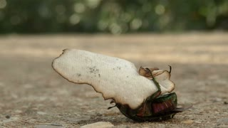 A bug playing with a peace of paper...