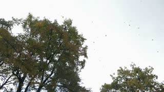 Footage of fall time, leaves are falling from the nearby trees...