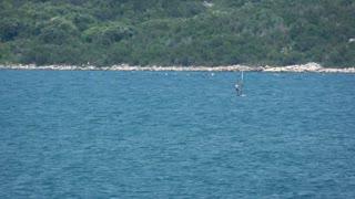 Footage of a wind surfer having good wind...
