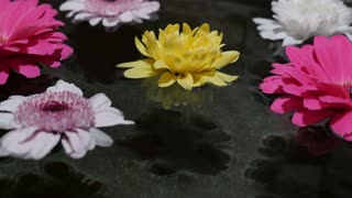 Footage of some flowers floating on water surface in a wellness center