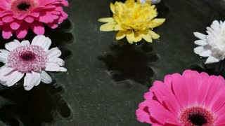 Footage of some flowers floating on water surface in a wellness center...