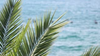 Peaceful scene of a sea and a palm tree in focus...